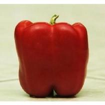 Quadrato d'Asti Rosso