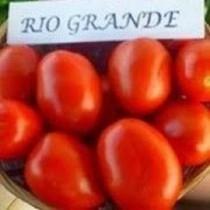 Rio Grande VIL