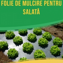 Black mulch UV film for letuce perforated