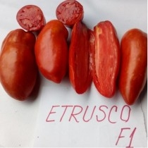 Etrusco F1