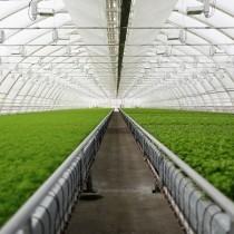 Eiffel Super Additivato film for greenhouses (per meter)
