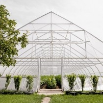 Eiffel Multisolar 33 film for greenhouses (per meter)