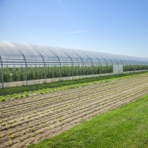 Eiffel Multisolar 42 film for greenhouses (per meter)