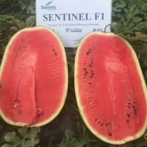 Sentinel F1