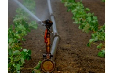Aplicarea produselor de protecție a plantelor