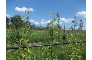 Sisteme de picurare folosite în legumicultură, horticultură și la plante cultivate în ghivece